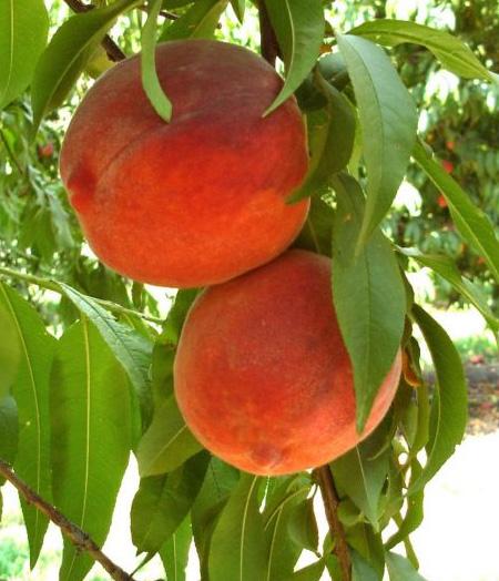 zn vagy Növényvédelem címke – ez a kifejezés sok helyen megtalálható az Agrároldalon
